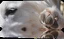 Vign_humeur_de_chiens_demonstrations_005