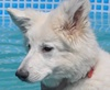 Vign_piscine_pentecote_2012_208