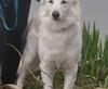 Vign_proprietaire_et_chiens_2012_001